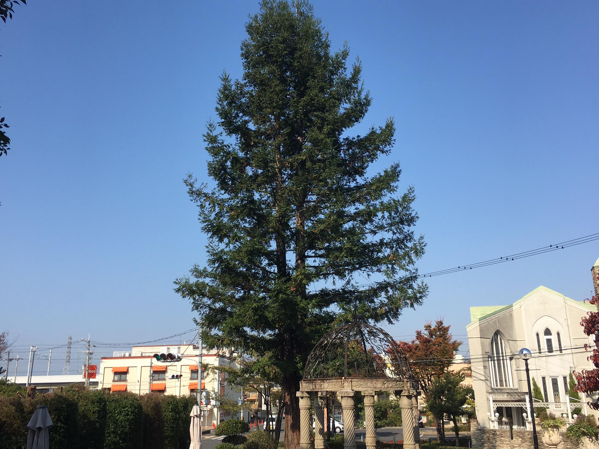ぽこぽこの木